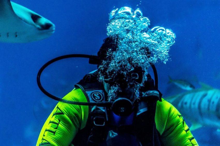 Ile kosztuje nurkowanie w klatce z rekinami?